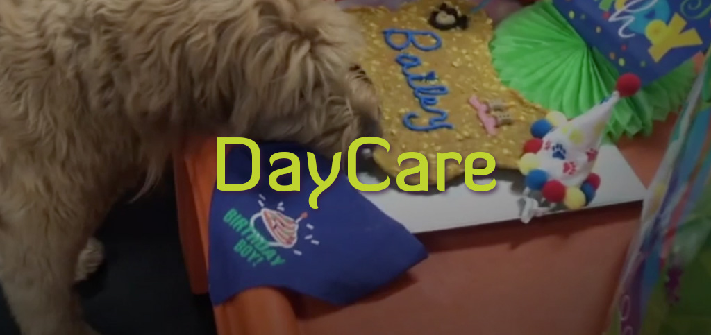 DAYCARE-1