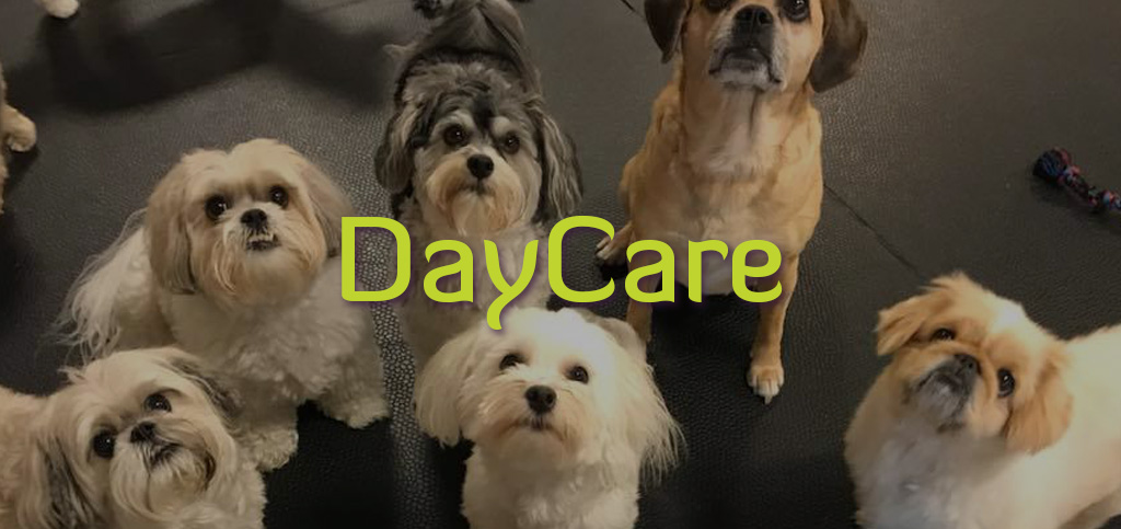 DAYCARE-2