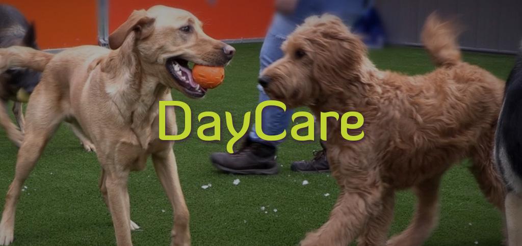 DAYCARE-3