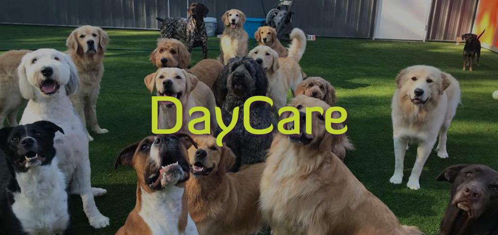 DAYCARE-4